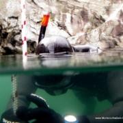 Lysekil1 180x180 - 2010 - et år under vandet
