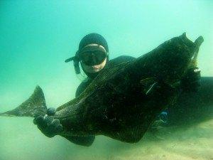 Undervandsjagt er fridykning med harpun