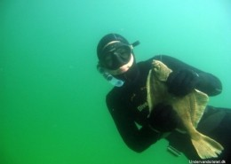 IMG 0674 260x185 - Uv jagt udstyr - kom igang med undervandsjagt 1/2 Uvpodcast 003