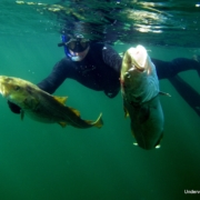 To torsk fanget ved undervandsjagt på et vrag i Øresund