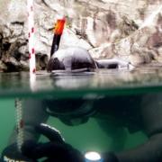 Ignite 12 180x180 - Nordic Deep 2011 - DM i fridykning