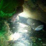 torsk vrag 150x150 - Trykudligning - ører, pandehule og maske - Uvpodcast 14