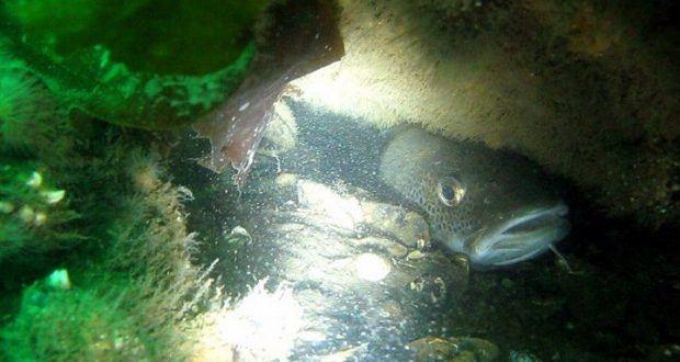 torsk vrag 620x330 - Undervandsjagt på vrag - uvpodcast 15
