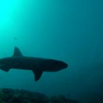 Johan White tip 150x150 - At rejse med undervandsjagt 1/2 Uvpodcast 005