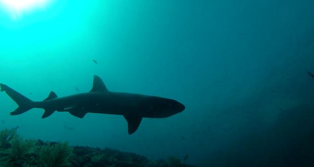 Johan White tip 620x330 - Undervandsjagt i udlandet. Hvad er farligt? 2/2 Uvpodcast 006
