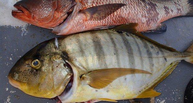 P30500701 620x330 - Undervandsjagt i Panama, Stillehavet
