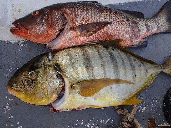 P30500701 e1423008820479 - Undervandsjagt i Panama, Stillehavet