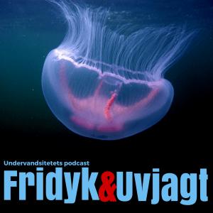 Undervandsitetets podcast cover1 300x300 - Uv jagt udstyr - kom igang med undervandsjagt 1/2 Uvpodcast 003