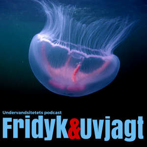 Undervandsitetets podcast cover 300x300 - Black out og iltmangel. Sikkerhed ved fridykning og uvjagt - uvpodcast 013