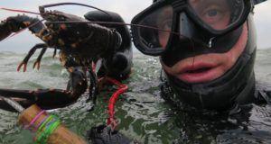 hummer fra limfjorden