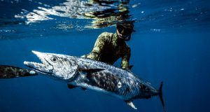 DSC04269 300x160 - Uv jagt på Madeira og Azorerne - Uvpodcast 27