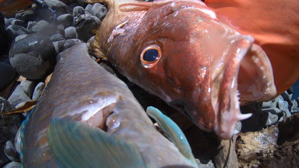 costa rica fisk 1024x576 - Uv jagt i Costa Rica - Uvpodcast 30