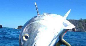 crevalle jack 300x160 - Uv jagt i Costa Rica - Uvpodcast 30