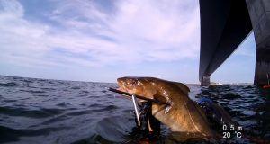 harpunfiskeri uvjagt regler