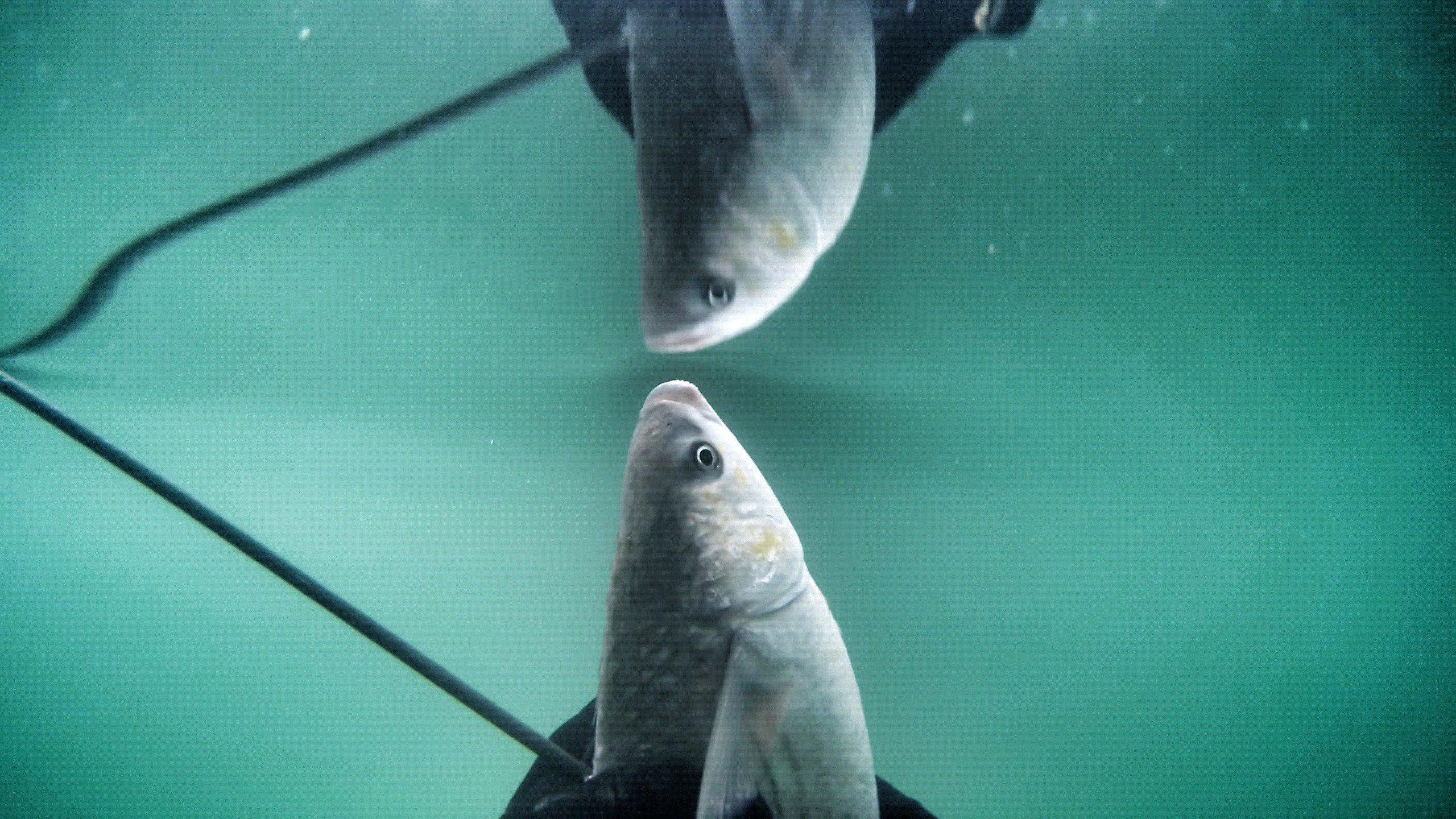 MOV 0335 0.33.200 01 - Undervandsjagt i Vesterhavet - Uvjagt på vestkysten- Uvpodcast #35