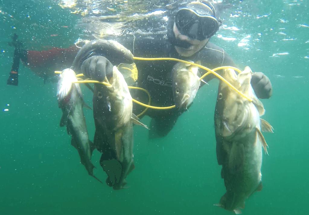 2019 06 01 1743 1024x715 - Undervandsjagt ulykker, lungeskader, reverse block, hajer og fjæsing - 45
