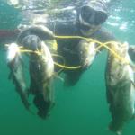 2019 06 01 1743 150x150 - Undervandsitetet - snorkling, undervandsjagt og fridykning