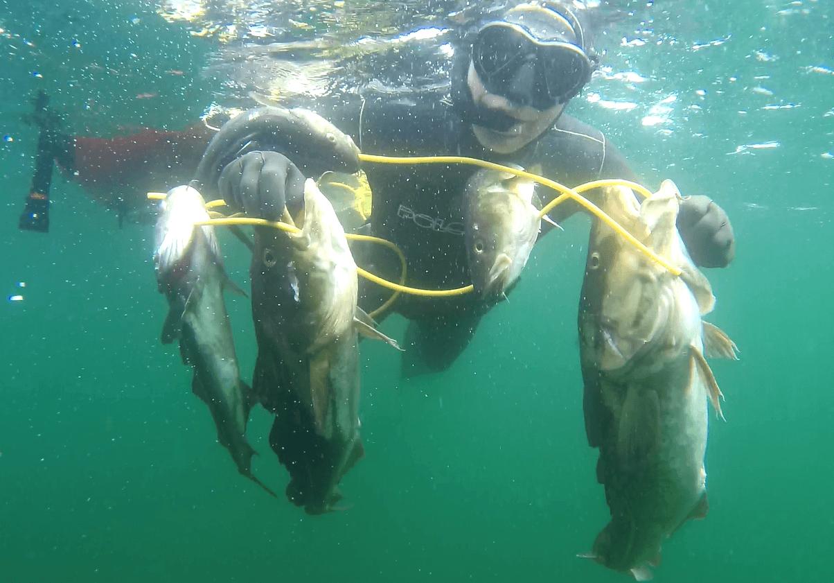 2019 06 01 1743 - Undervandsjagt ulykker, lungeskader, reverse block, hajer og fjæsing - 45