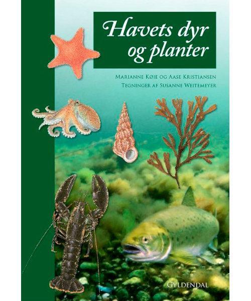 Havets dyr og planter 500x600 - Havets dyr og planter