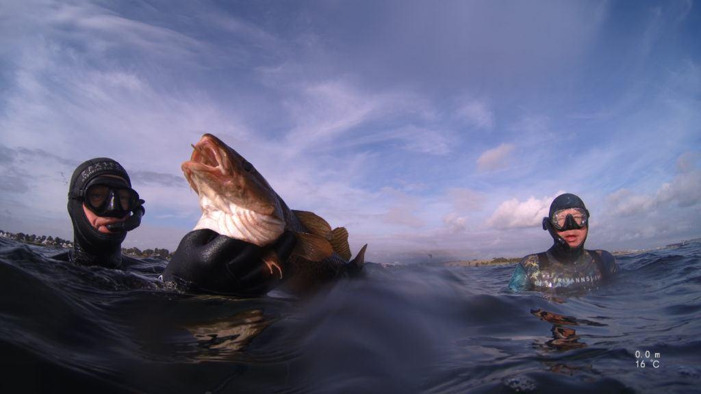 IMG 0518 1024x576 - Dykning med hajer, sæler, hvaler og krokodiller - Uvpodcast #49
