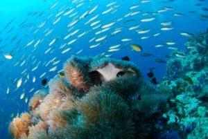 diving 689825 1920 300x201 - Dykkermasker