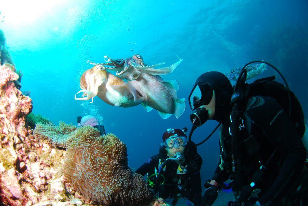 diving 689831 1920 1024x685 - Dykkermasker / dykkermaske