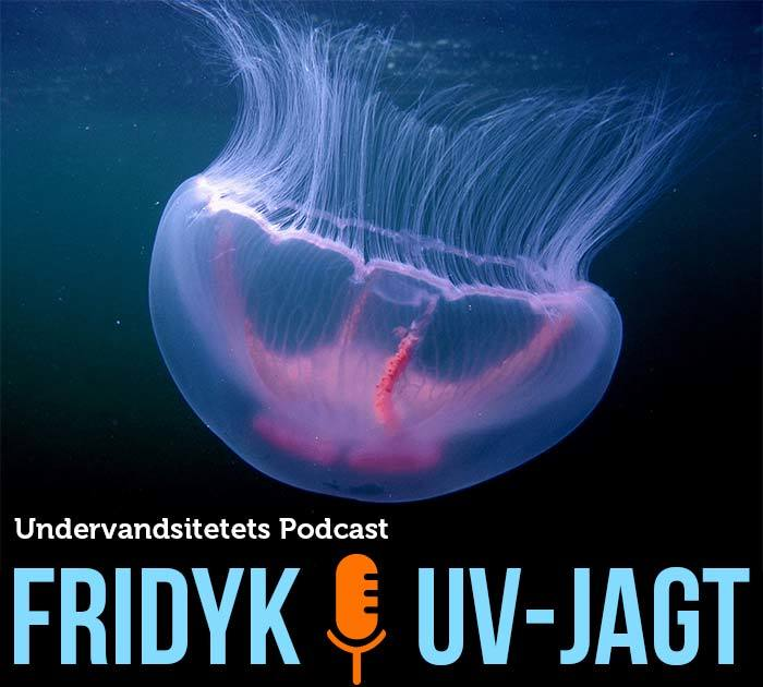 podcast - Undervandsitetet - snorkling, undervandsjagt og fridykning