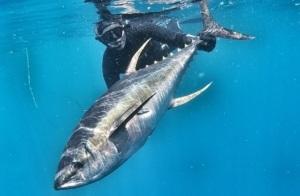 G0060638 01 1 300x196 - Undervandsitetet - snorkling, undervandsjagt og fridykning