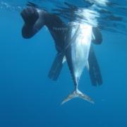 tun2 37 180x180 - Uv-jagt i Sydafrika 1/3 - de langfinnede tun