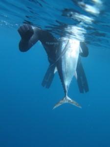 tun2 37 225x300 - Undervandsitetet - snorkling, undervandsjagt og fridykning