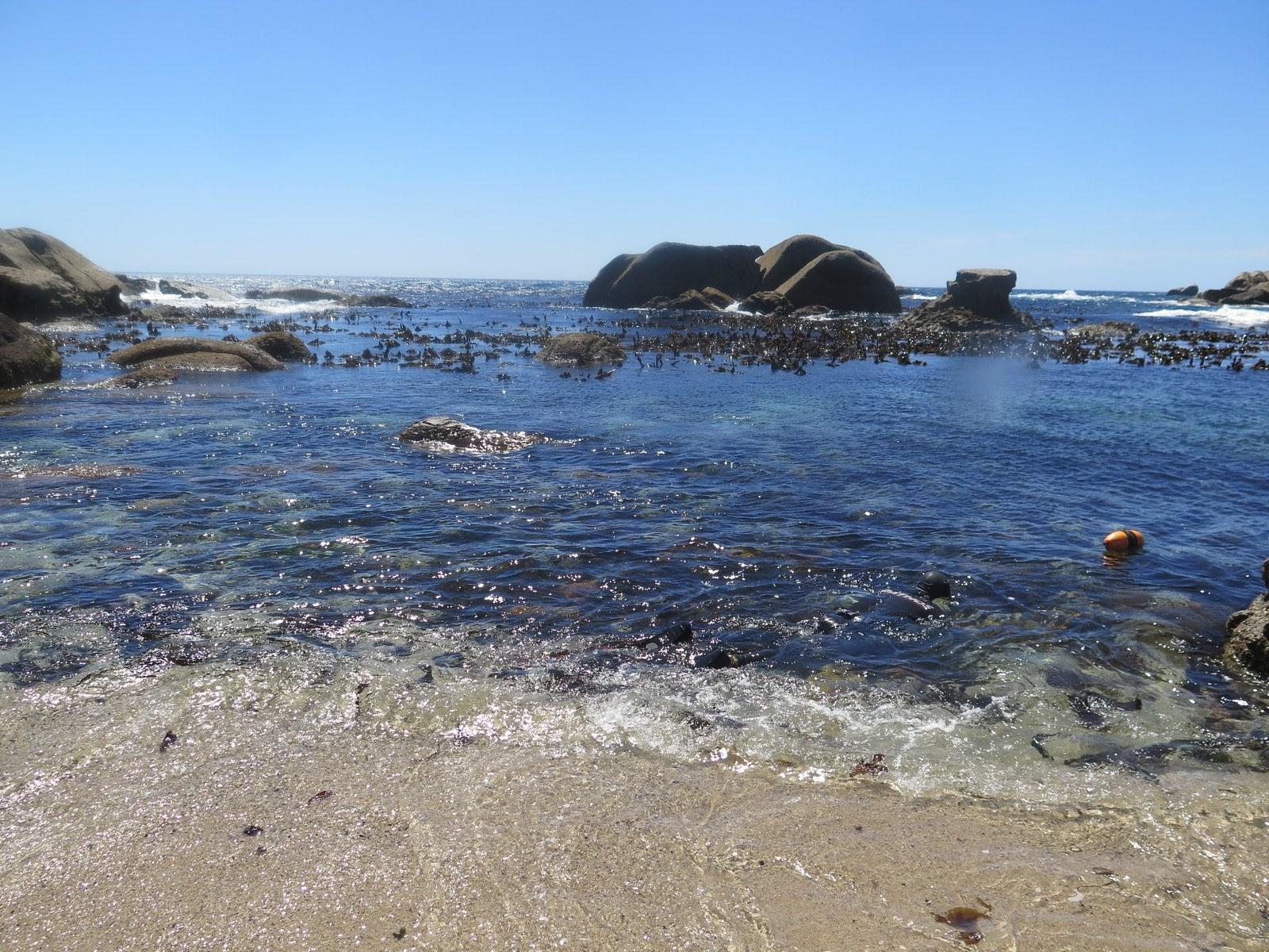 20191121064836 scaled - Hvidhajer og abelone i Sydafrika