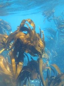 20191121074233 225x300 - Undervandsitetet - snorkling, undervandsjagt og fridykning