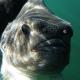 IMG 6174 80x80 - Svømme med vilde delfiner i Danmark? - forstå fænomenet. Uvpodcast #65
